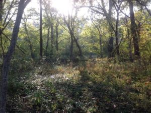 SOLD!!  31 Acres of Riverfront Hunting Land For Sale in Halifax County VA!