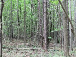 UNDER CONTRACT!  11 Acres of Residential Land For Sale in Dinwiddie County VA!