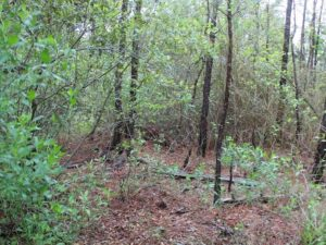 UNDER CONTRACT!  4.8 Acres of Water View Residential Land For Sale in Mathews County VA!