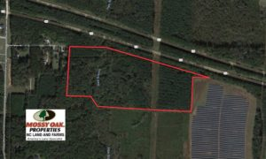 SOLD!  40 Acres of Timber and Hunting Land For Sale in Nash County NC!