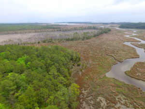 UNER CONTRACT!  109 Acres of Hunting Land for Sale in Mathews County VA!