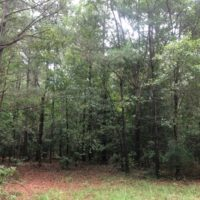 SOLD! 25 Acres of Land for Sale in Bladen County NC!