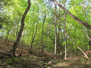 UNDER CONTRACT!  25 Acres of Land with Home in King William County VA!