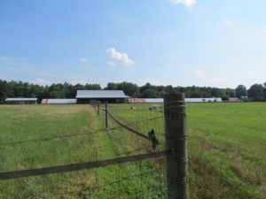 UNDER CONTRACT!  55 Acres of Farm Land with Log Home For Sale in Suffolk County VA!