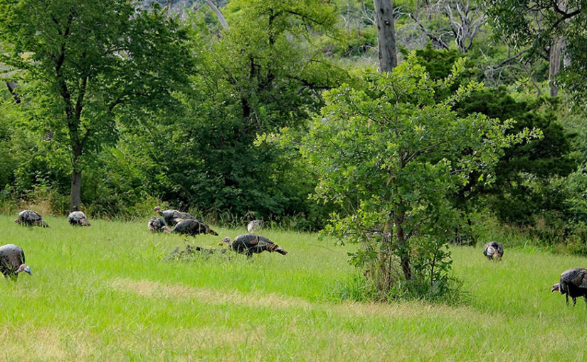 CREATING WILD TURKEY HANGOUTS