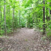 SOLD! 42.5 Acres of Hunting Land with Lodge For Sale in Brunswick County VA!