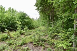UNDER CONTRACT!  42.5 Acres of Hunting Land with Lodge For Sale in Brunswick County VA!