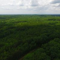 SOLD!  11.46 Acres of Hunting and Timber Land For Sale in Person County NC!