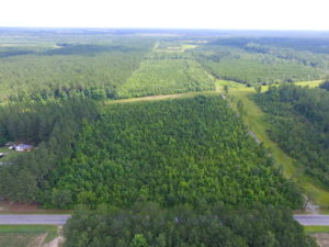 UNDER CONTRACT!  22 Acres of Wooded Hunting Land For Sale in Greensville County VA!