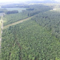 SOLD! 22 Acres of Wooded Hunting Land For Sale in Greensville County VA!
