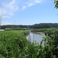 SOLD! 55 Acres of Waterfront Multipurpose Land For Sale in James City County VA!