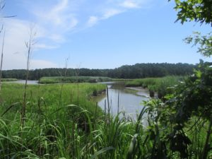 UNDER CONTRACT!  55 Acres of Waterfront Multipurpose Land For Sale in James City County VA!