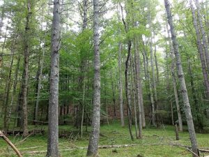 UNDER CONTRACT!  5 Acres of Residential Hunting Land For Sale in Amherst County VA!