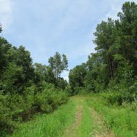101 Acres of Hunting Land For Sale in Cumberland County NC!