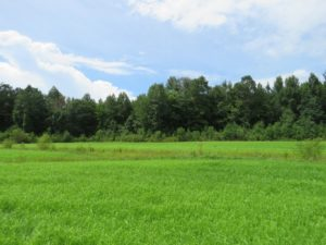 SOLD!  101 Acres of Hunting Land For Sale in Cumberland County NC!