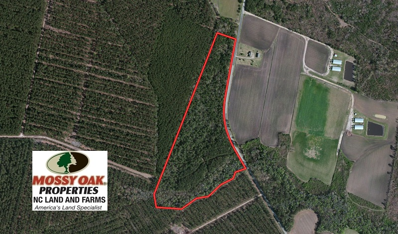 SOLD!  27.72 Acres of Timber and Hunting Land for Sale in Pender County NC!