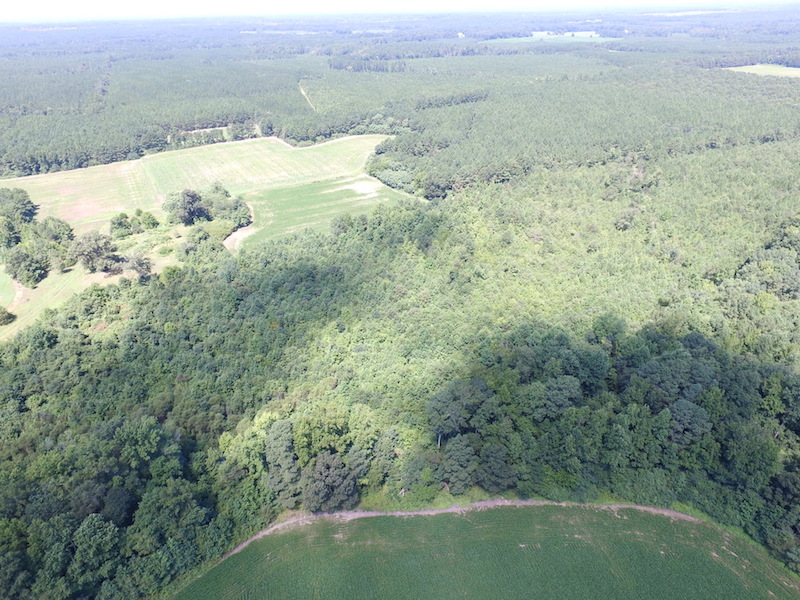 SOLD! 29 Acres of Hunting and Timber Land in Greensville