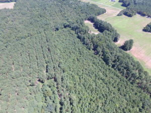 UNDER CONTRACT!  29 Acres of Hunting and Timber Land in Greensville County VA!
