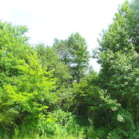 SOLD!  53 Acres of Hunting and Timber Land  For Sale in Suffolk VA!