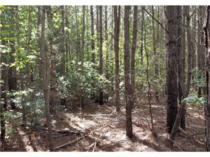 SOLD!!  24 Acres of Waterfront Lot off Farnham Creek in Richmond County VA!