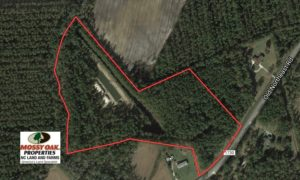 SOLD!  16 Acres of Hunting and Timber Land For Sale in Columbus County NC!