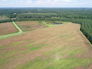 UNDER CONTRACT!  650 Acres of Farm and Timber Land For Sale in Halifax County NC!
