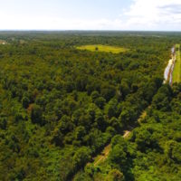 251 Acres of Recreational Hunting Land with Lodge For Sale in Hyde County NC!