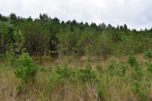 UNDER CONTRACT!  16 Acres of Hunting Land For Sale in Accomack County VA!
