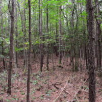 SOLD! 16 Acres of Hunting Land For Sale in Accomack County VA!