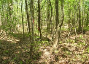 UNDER CONTRACT!  15 Acres of Hunting and Residential Land For Sale in Prince Edward County VA!