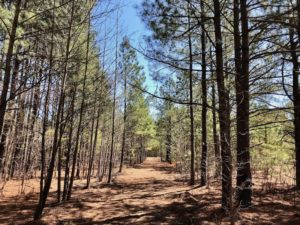 UNDER CONTRACT!  11.77 Acres of Residential and Hunting land for Sale in Harnett County, NC!