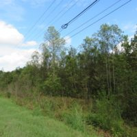 SOLD!  70 Acres of Hunting Land For Sale in Robeson County NC!