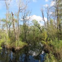 70 Acres of Hunting Land For Sale in Robeson County NC!