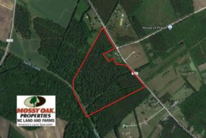 SOLD!  47 Acres of Timber and Hunting Land For Sale in Pitt County NC!