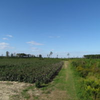 SOLD!  118 Acres of Farm and Timber Land For Sale in Suffolk VA!