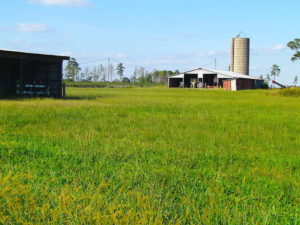 UNDER CONTRACT!  118 Acres of Farm and Timber Land For Sale in Suffolk VA!