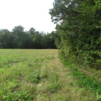 5 Acres of  Cleared Building Land For Sale in Suffolk County VA!
