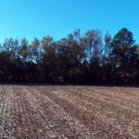 18 Acres of Farm and Timber Land For Sale in Robeson County NC!