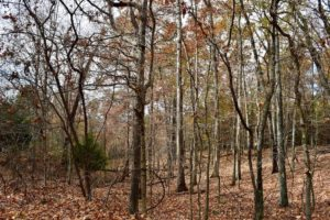 UNDER CONTRACT!  40 Acres of Recreational and Residential Land for Sale in Botetourt County VA!