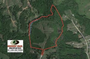 SOLD!  52 Acres of Hunting Land For Sale in Caswell County NC!