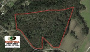 UNDER CONTRACT!  30.6 Acres of Hunting and Timber Land For Sale in Columbus County NC!