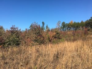 UNDER CONTRACT!  28 Acres of Residential Hunting Land For Sale in Lunenburg County VA!