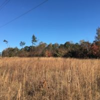 SOLD! 28 Acres of Residential Hunting Land For Sale in Lunenburg County VA!
