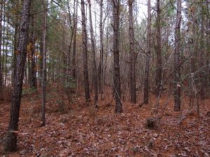 SOLD!!  12.52 Acres of Recreational Hunting Land For Sale in Nash County NC!