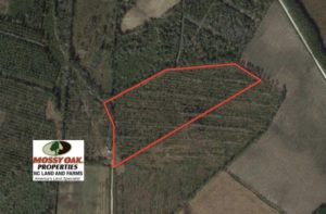 SOLD!  20 Acres of Hunting and Timber Land for Sale in Columbus County NC!