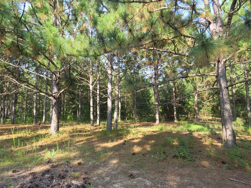 UNDER CONTRACT! 89 Acres of Timber and Farm Land For Sale in