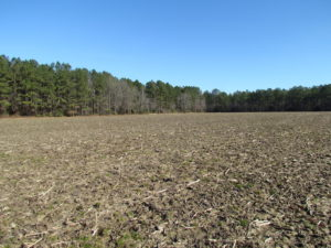 UNDER CONTRACT!  42.6 Acres of Timber and Farm Land For Sale in Sussex County VA!
