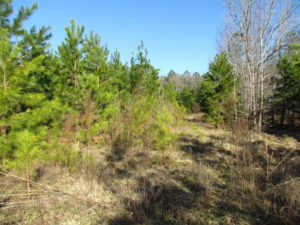 UNDER CONTRACT!  17.7 Acres of Residential and Hunting Land For Sale in Greensville County VA!