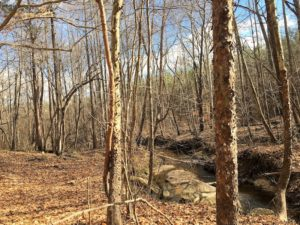 20 Acres of Residential Land with Home For Sale in Nottoway County VA!