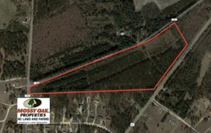 SOLD!  25 Acres of Timber Land For Sale in Hoke County NC!